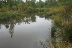 Wetland and Surface Water Management